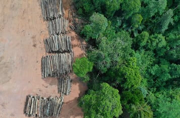 Combating Deforestation with Blockchain in Africa: Everything You Need to Know